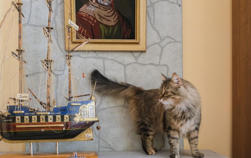 """Кличку кошка получила в честь возлюбленной Дон Кихота. Фото Алена Бобрович, """"Metro"""""""