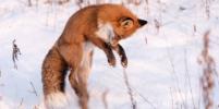 Фотогеничные жители Камчатки: что необходимо знать тем, кто снимает животных