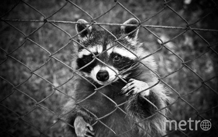 """В рамках """"творческой инициативы"""" в тюрьме появился контактный зоопарк. Фото pixabay.com"""