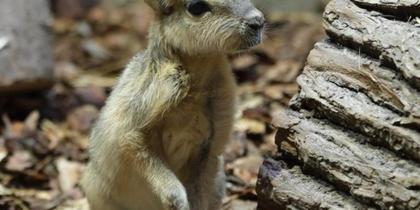 В Ленинградском зоопарке снова пополнение: кто на этот раз