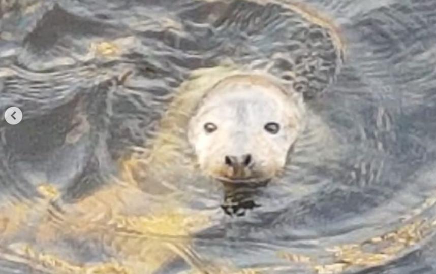 В Петербурге спасают худого малыша-тюлененка. Фото instagram.com/nerpa_spb.