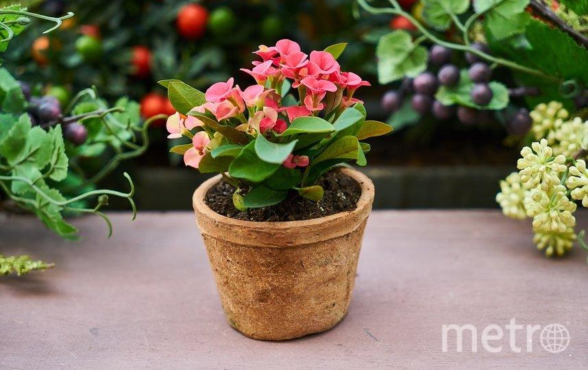 Все, что останется после посевной открытки - прекрасный цветок. Фото Pixabay