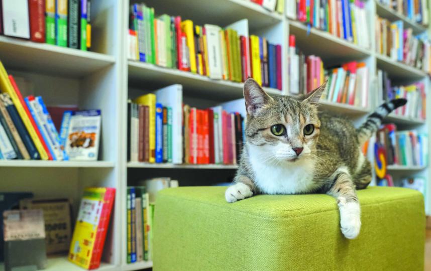 "Муся 14 лет живёт в библиотеке. Фото Алена Бобрович, ""Metro"""