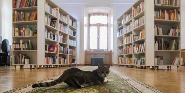 Муся любит готические романы и детскую литературу на иностранных языках.