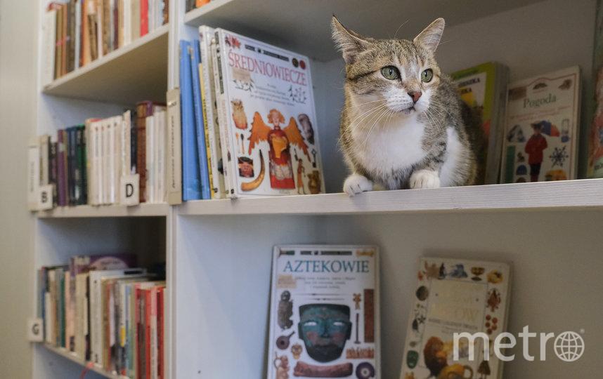 """Муся любит готические романы и детскую литературу на иностранных языках. Фото Алена Бобрович, """"Metro"""""""