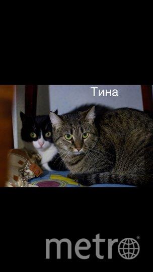 """Хвостатых до сих пор ищут. Фото """"Пушистые лапки - приют для кошек СПб #лапкивдом""""."""