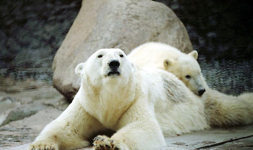 Медведица Услада. Фото spbzoopark, vk.com.