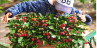 Корзины с цветами и ягодами могут стоять годами