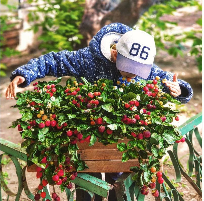 Наталья начала лепить в декрете. Фото instagram.com@flowers_by_natalya