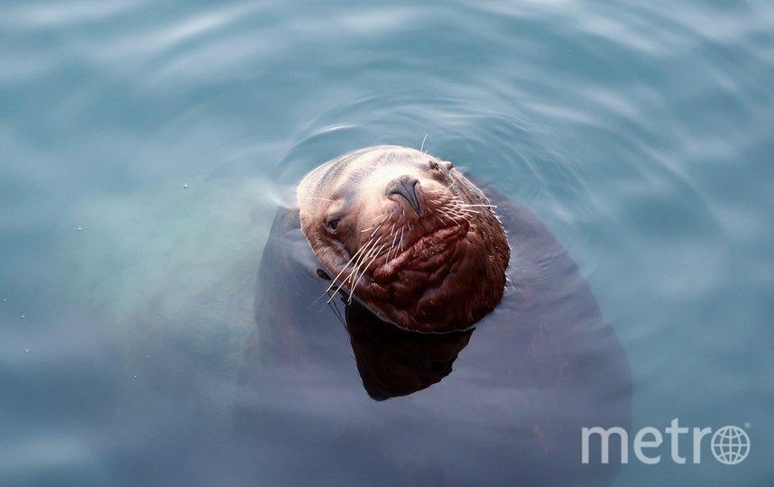 Серфер рассказал, как спасся от тюленей на Курилах. Фото pixabay.