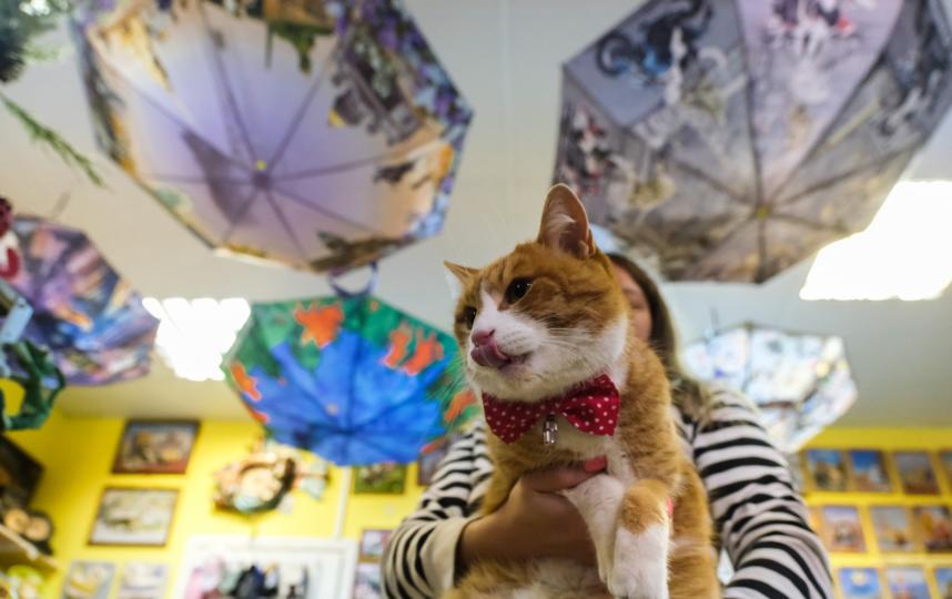 """Ланселот продвигает товары одного из сувенирных магазинов в центре Петербурга. Фото Алена Бобрович, """"Metro"""""""