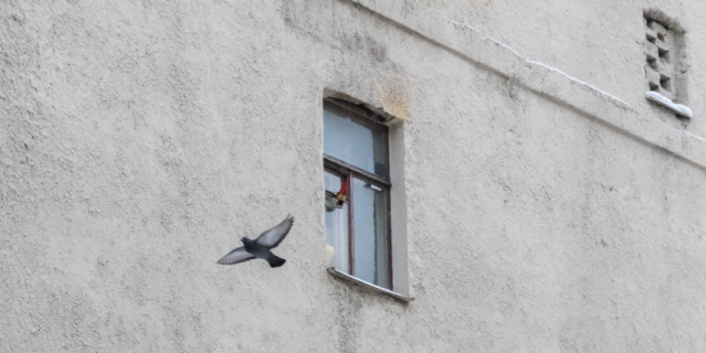 Окно Родиона Раскольникова смотрит в глухую стену противоположного дома.