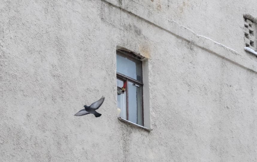 """Окно Родиона Раскольникова смотрит в глухую стену противоположного дома. Фото Алена Бобрович, """"Metro"""""""