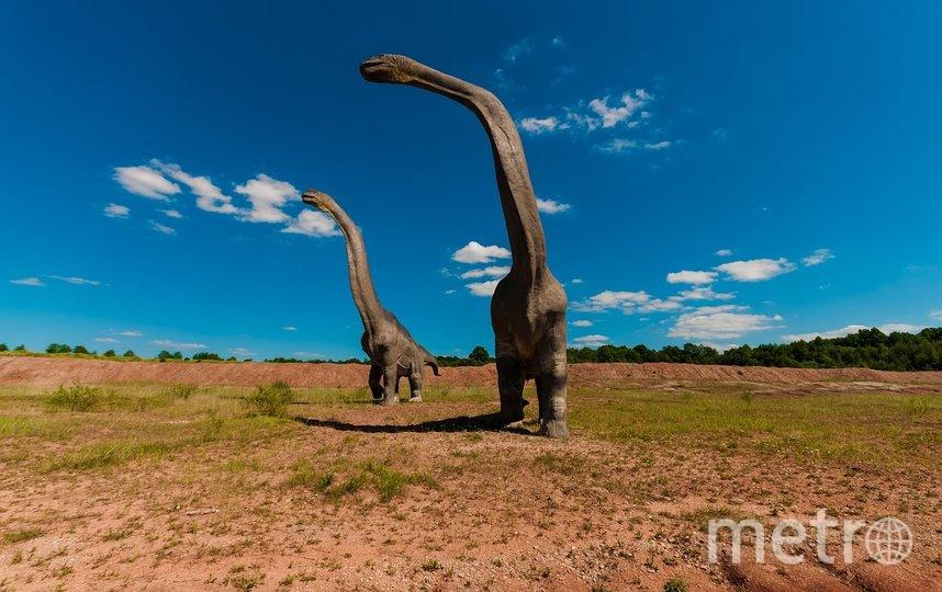 Исследователи считают, что за все время своего существования на планете жило около 2,5 миллиарда особей титанозавров. Фото pixabay.com