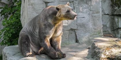 Пиззли появляются не от хорошей жизни: насколько животные опасны и живут ли они в России