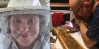 Пчеловоды очень успешно