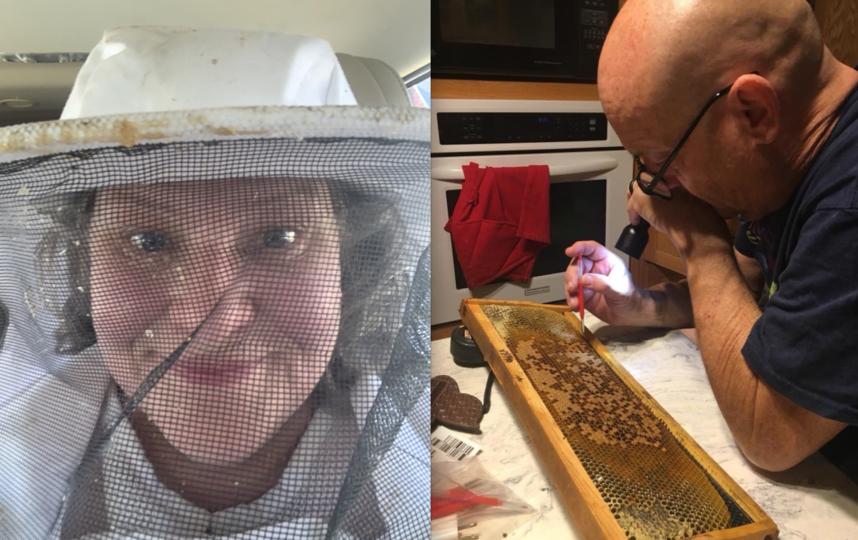 """Мишель и Мэтт считают пчёл """"очаровательными созданиями"""". Фото tiktok: @honeybeeboerst"""
