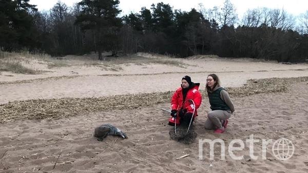 Петербуржцы спасли истощенного тюлененка. Фото ГУП «Водоканал Санкт-Петербурга».