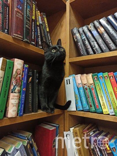 Чёрная кошка Багира Ивановна. Фото ПРЕДОСТАВЛЕНО ЦЕНТРОМ «СТАРТ».