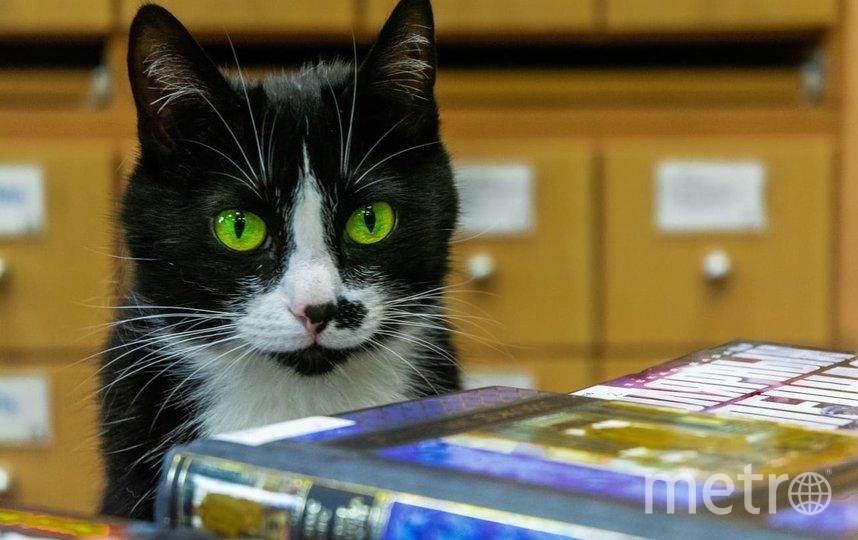 Сима чувствует себя хозяйкой библиотеки. Фото НАТАЛЬЯ ЯКОВЛЕВА.