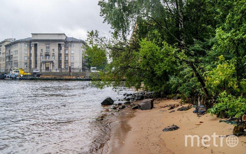 Дикий участок набережной Макарова. Фото zarosli.space.