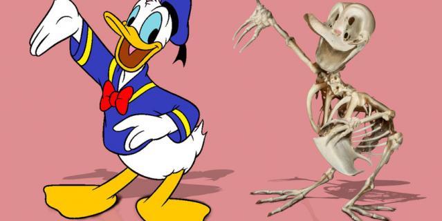 Дональд – главный герой серии мультфильмов про очень эмоционального селезня.
