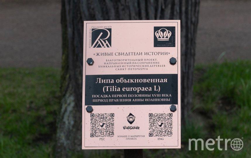 "Возле каждого дерева установлена табличка с QR-кодом. Фото Святослав Акимов, ""Metro"""