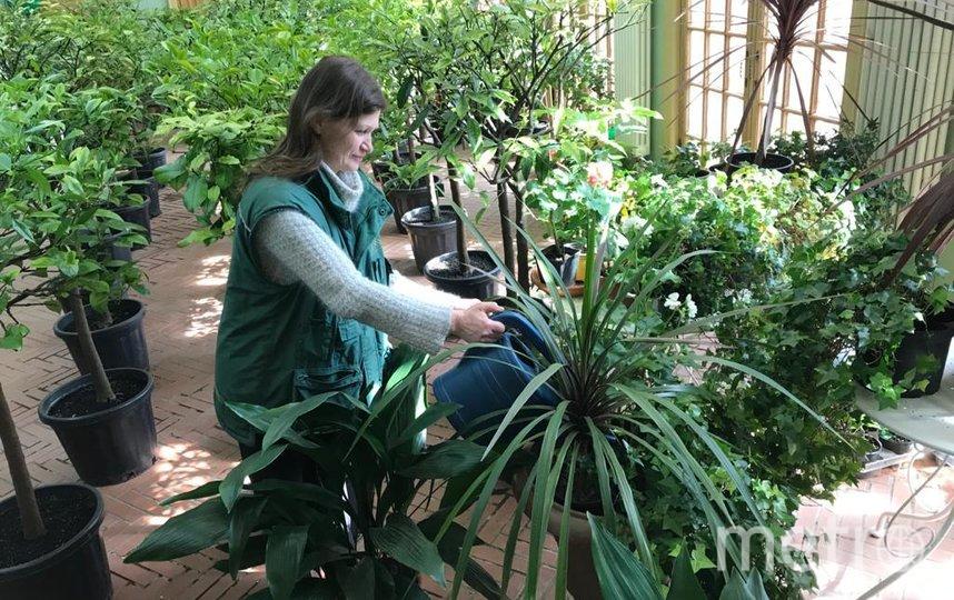 """В Летнем саду есть собственная маленькая оранжерея. Фото """"Metro"""""""
