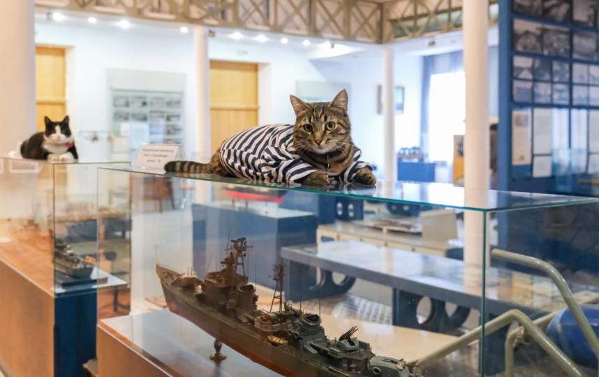 "Матрос стережет модели кораблей. Фото Алена Бобрович, ""Metro"""