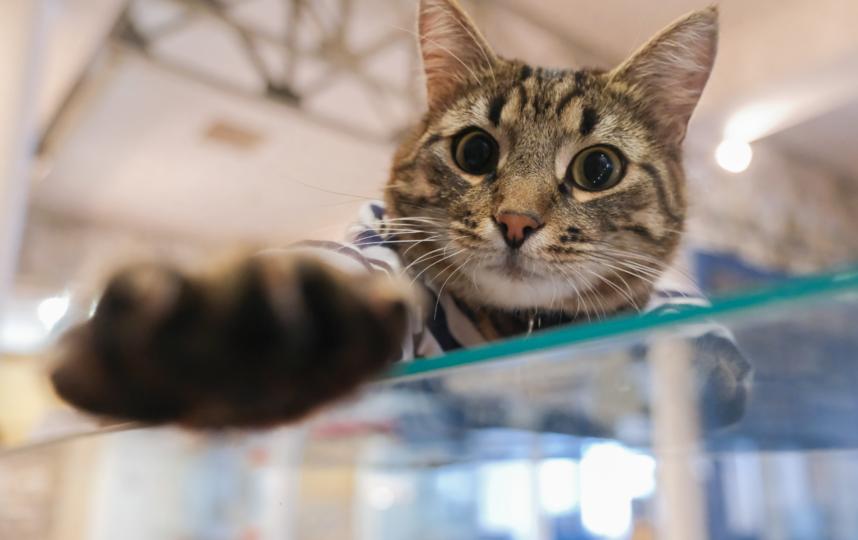 """Кот живет на заводе 2 года. Фото Алена Бобрович, """"Metro"""""""