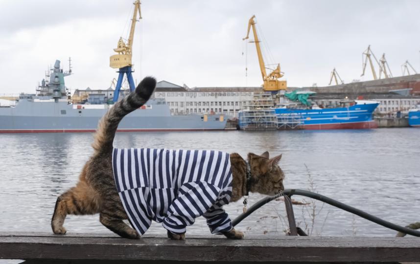 """Матрос прогуливается по заводской набережной. Фото Алена Бобрович, """"Metro"""""""