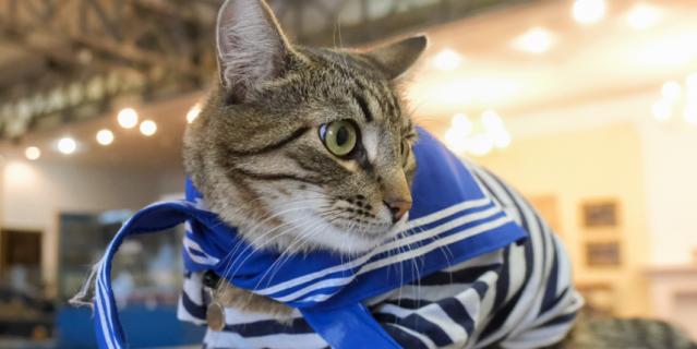 Кот живет на заводе 2 года.