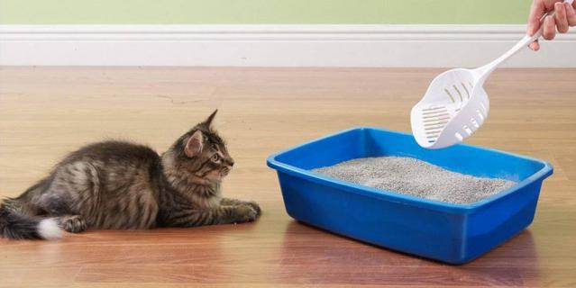 Комкующийся наполнитель для кошек.