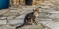 Кошки спасают улицы Чикаго: как они отпугивают крыс