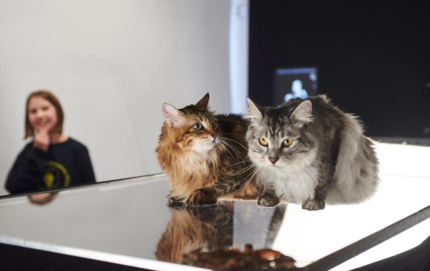 Так проходит фотосессия для двух прекрасных хвостатых моделей. Фото GETUNDERLOOK
