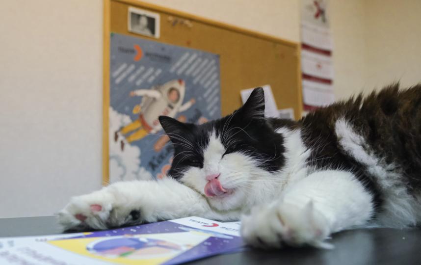 """Яша – главный и любимый кот в театре. Фото Алена Бобрович, """"Metro"""""""