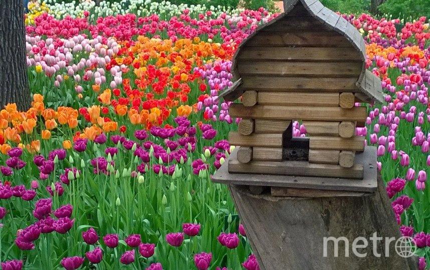 Фестиваль продлится четыре дня: 22 и 23 мая, а также 29-30 мая. Фото Елена Разгуляева.