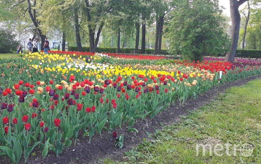 Фестиваль продлится четыре дня: 22 и 23 мая, а также 29-30 мая. Фото Татьяна Зайцева.