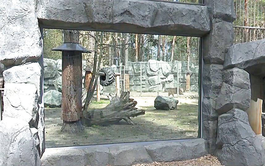 Электропастухи проектируют в зависимости от животного. Например, у крупных хищников стоит двойная система защиты. Фото metro