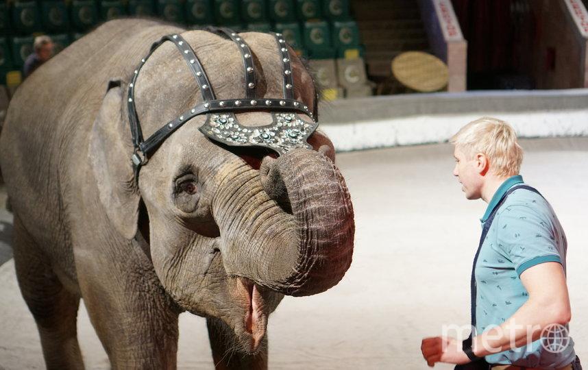 Гвоздем программы стали слоны. Фото Пресс-служба Росгосцирка