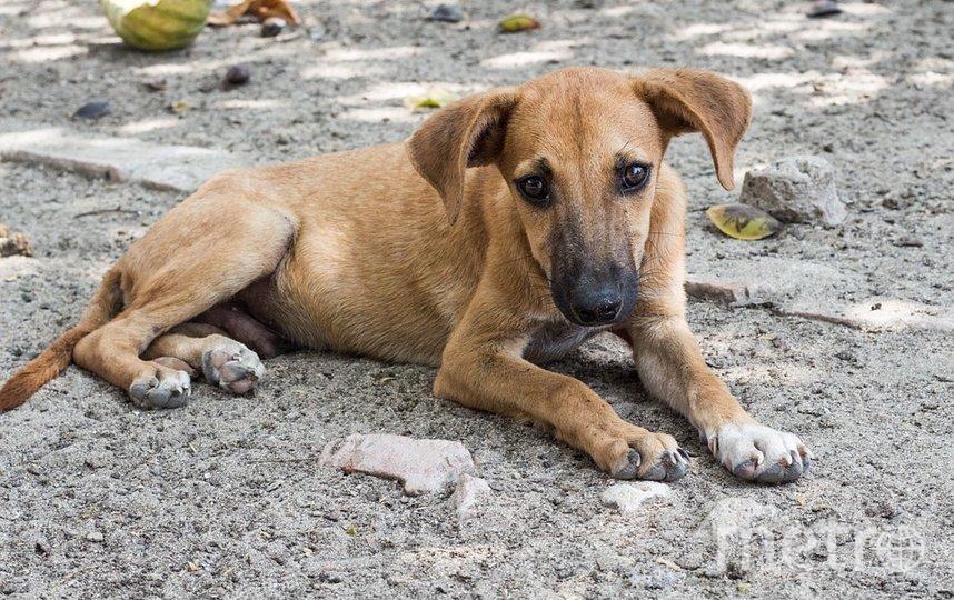 На территории страны более 650 тысяч бездомных животных. Фото Pixabay