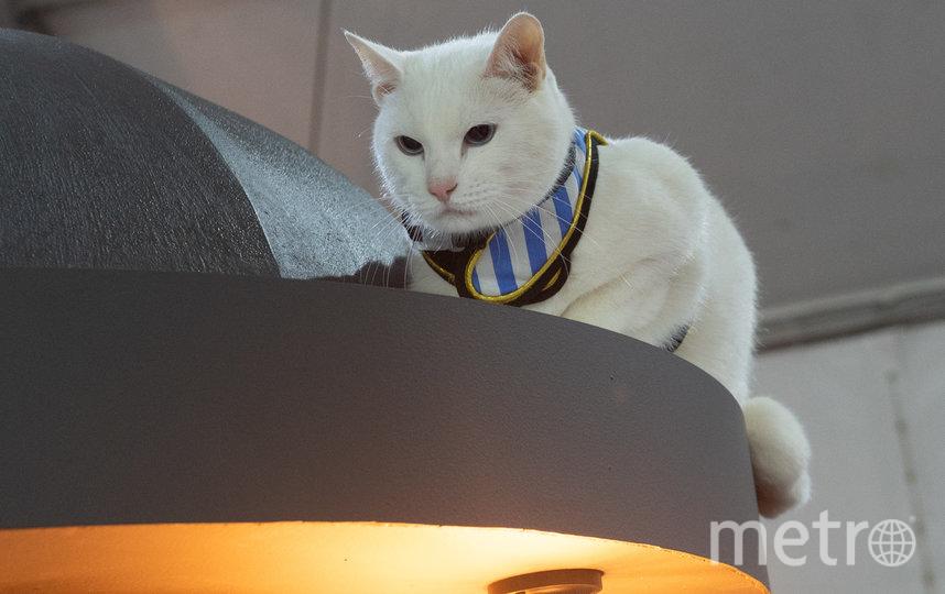 """В день открытия, 26 мая, гостем стал знаменитый эрмитажный кот Ахилл. Фото Святослав Акимов., """"Metro"""""""