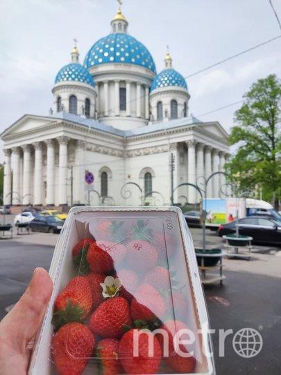 Стартовый капитал клубничного бизнеса — 500 тысяч рублей. Фото Роман Харисов.