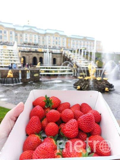 Петербургскую клубнику покупают в основном жители Петергофа, а также частные кондитеры и сборщики съедобных шоколадно-фруктовых букетов.. Фото Роман Харисов.