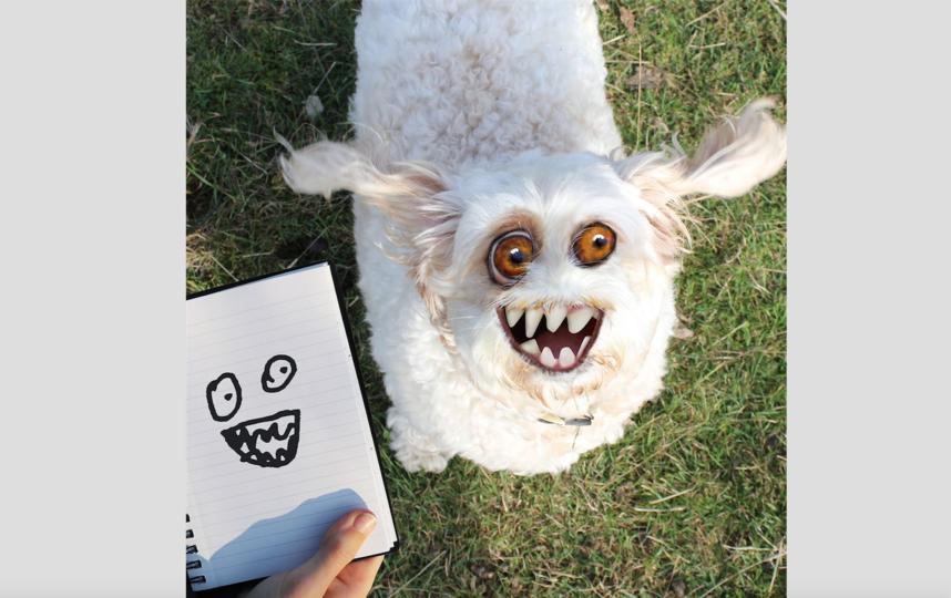 """И всё-таки зверушки, по словам автора, набирают больше """"лайков"""". Фото Instagram: @thingsihavedrawn"""