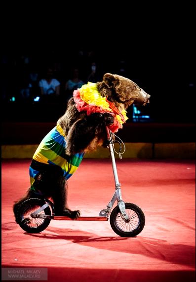 У Масяни большой цирковой опыт. Фото Фото предоставлены Байрамом Атаевым.