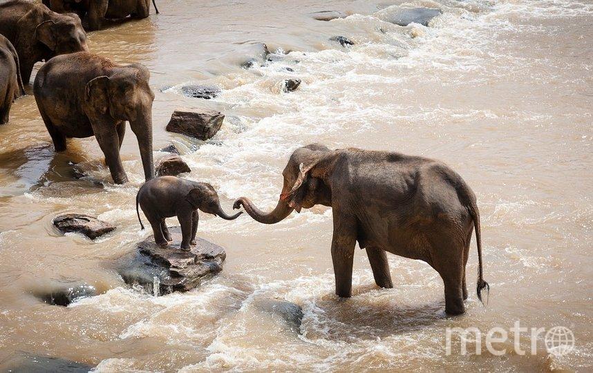 Местные жители блокируют слонам путь с помощью грузовиков. Фото pixabay.com