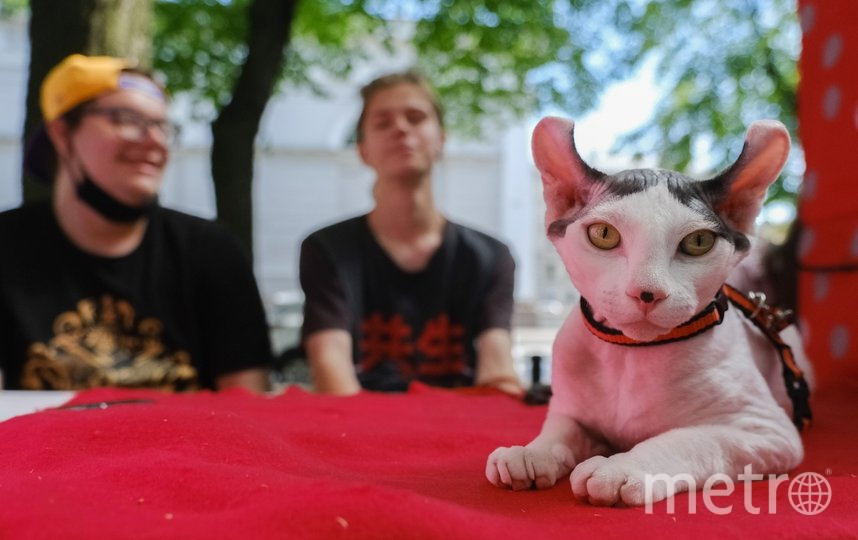 "Выставка-продажа котов. Фото Алена Бобрович, ""Metro"""