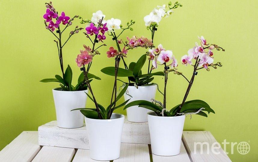 Правильно выбранный режим полива обеспечит хороший рост орхидеи. Фото Pixabay
