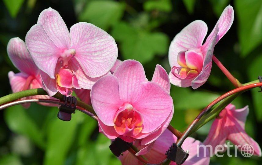 Уход за орхидеями не такой сложный, как может показаться на первый взгляд. Фото Pixabay